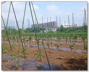 こじまファームの土は、里山の落ち葉を腐葉土にしたものを使用しています。
