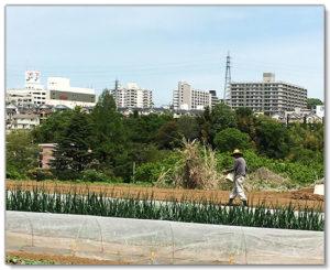 こじまファーム農園主:作り手・小島正明