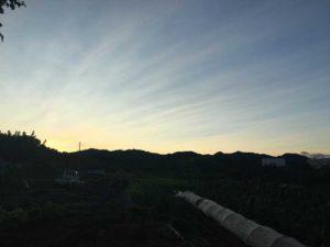 早朝の畑|八王子こじまファーム