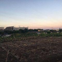 早朝の畑から住宅地を望む