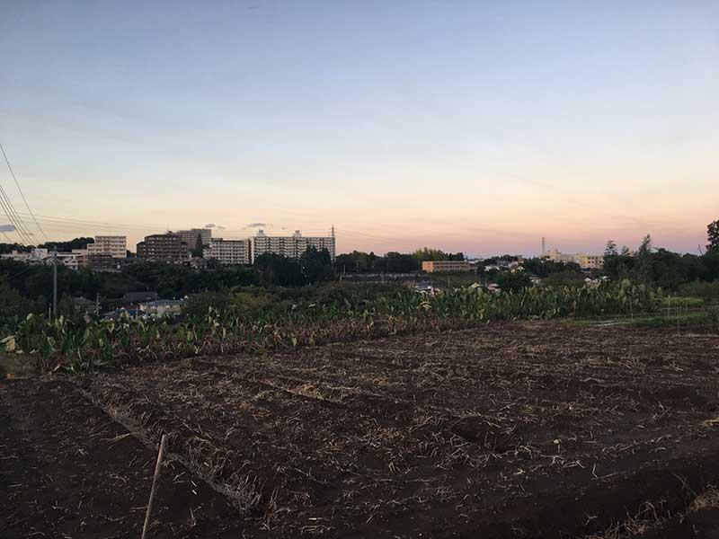 早朝の畑から住宅地を望む|八王子こじまファーム