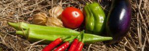 こじまファームは野菜も自分たちで作っています。
